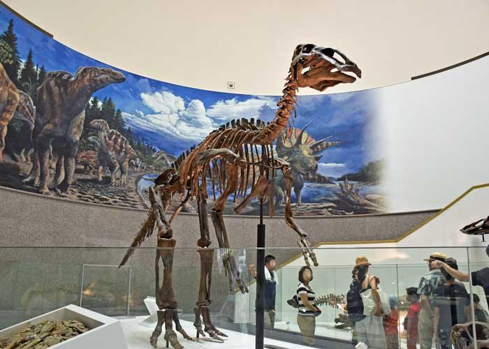 豊橋市自然史博物館にあるエドモントサウルスの実物全身骨格