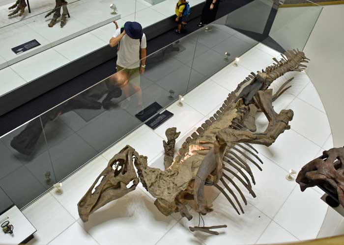 エドモントサウルスのミイラの標本展示:豊橋市自然史博物館