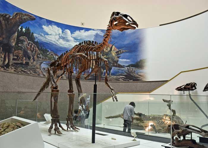 エドモントサウルスの実物化石の全身骨格:豊橋市自然史博物館