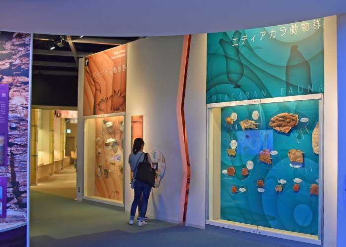 豊橋市自然史博物館に展示してある古生代の化石