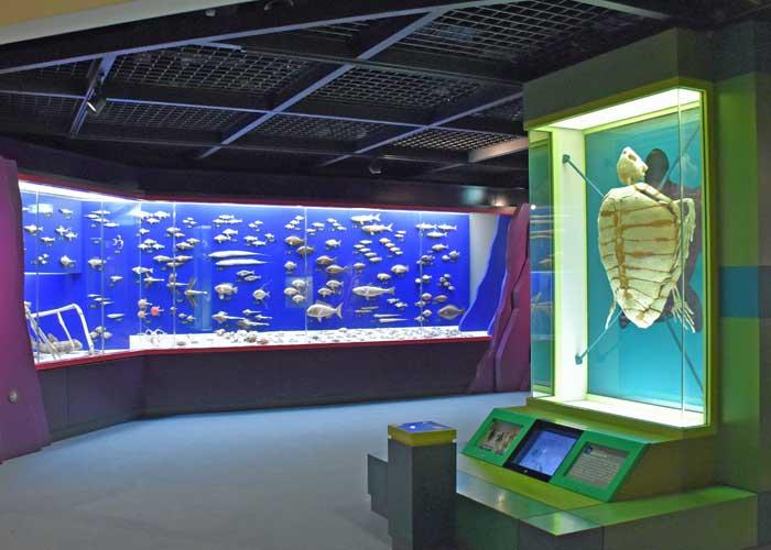 豊橋市自然史博物館の郷土の自然・海の生き物展示室