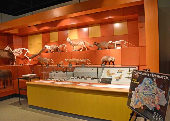 豊橋市自然史博物館の郷土の自然・生き物のはく製
