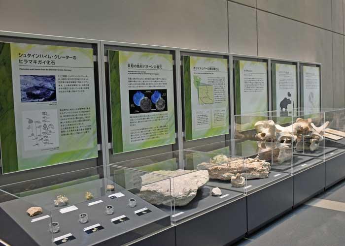 豊橋市自然史博物館の化石の展示