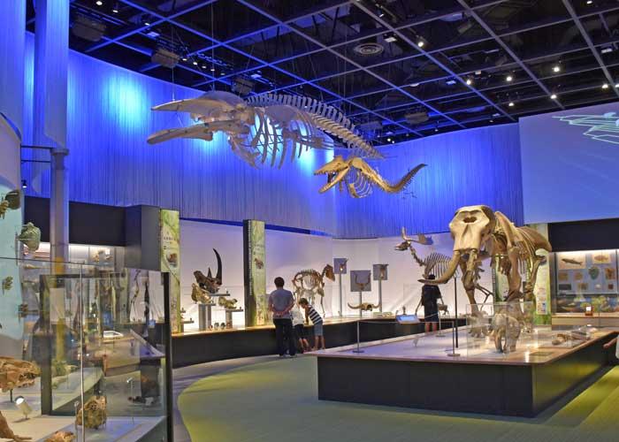 豊橋市自然史博物館の新生代展示室の様子