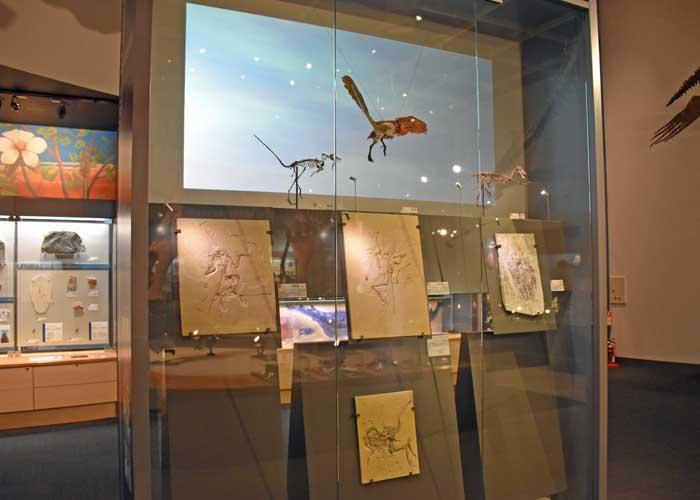 豊橋市自然史博物館の翼竜の展示コーナー:始祖鳥・孔子鳥・コンプソグナトゥス
