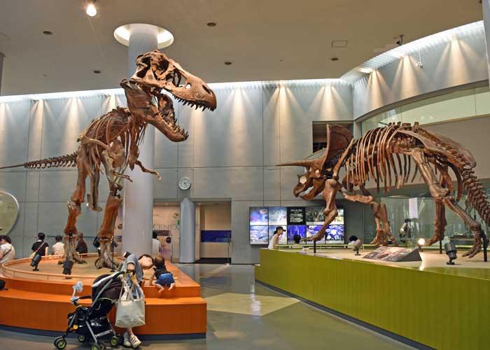 ティラノサウルスの全身骨格模型:豊橋市自然史博物館の自然史スクエア