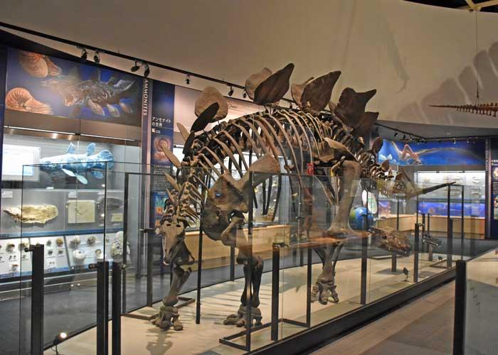 ステゴサウルスの全身骨格模型:豊橋市自然史博物館