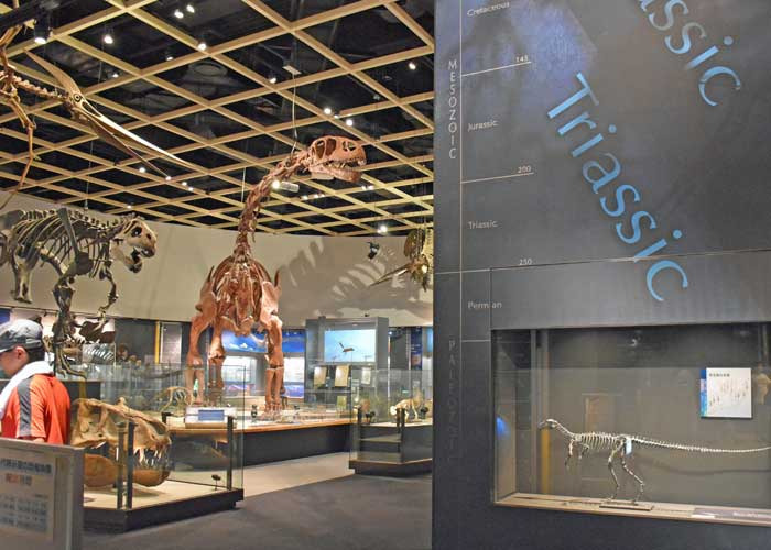 豊橋市自然史博物館の中生代展示室