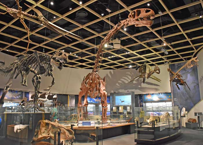 豊橋市自然史博物館にある恐竜の全身骨格:ユアンモサウルス・アロサウルス・プテラノドンなど