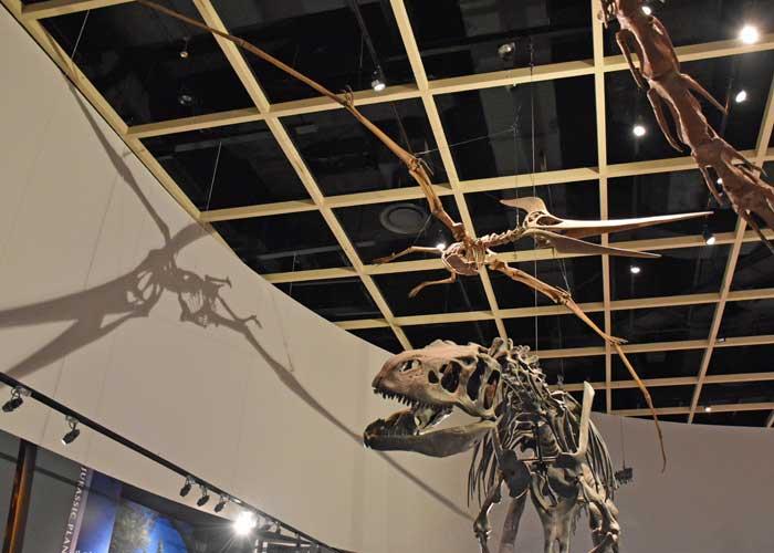 アロサウルスとプテラノドンの全身骨格模型:豊橋市自然史博物館