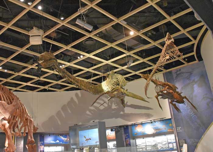 首長竜タラソメドンなどの全身骨格模型の展示:豊橋市自然史博物館