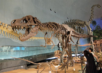 福井県立恐竜博物館のティラノサウルス全身骨格