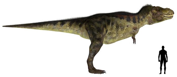 ティラノサウルスと人間の大きさを比較