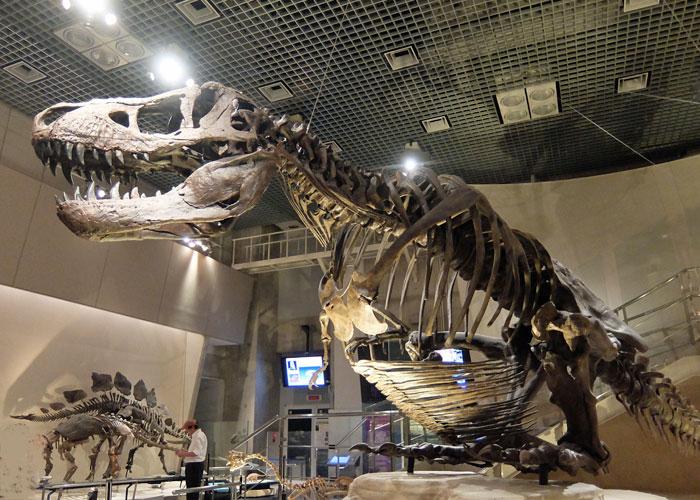 国立科学博物館のティラノサウルスの全身骨格